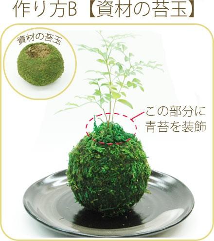 作り方B【資材の苔玉から】