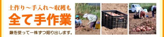 手作業で栽培