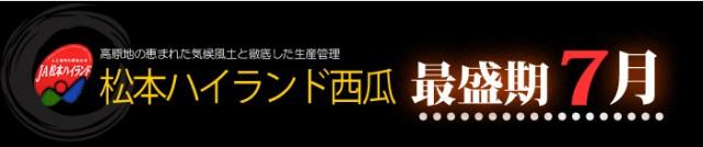 長野JA松本ハイランドすいか最盛期7月