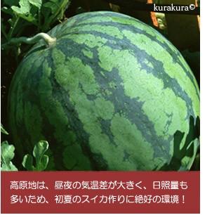 日本縦断スイカリレー鳥取に続く信州長野県産