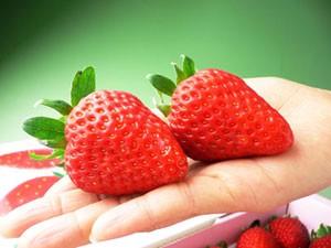 大粒で出来のいい苺をお届けします♪