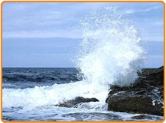 鮭の豊富な三陸海