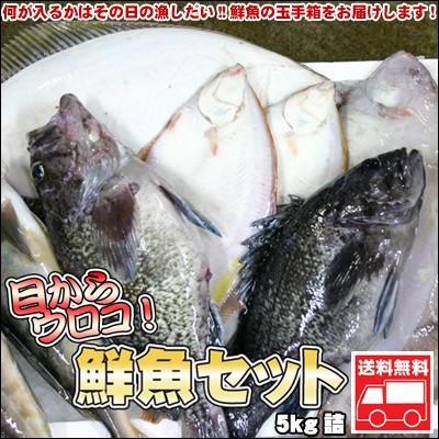 鮮魚セット 業務用 居酒屋 送料無料 北海道産 5kg ※沖縄送料別途加算