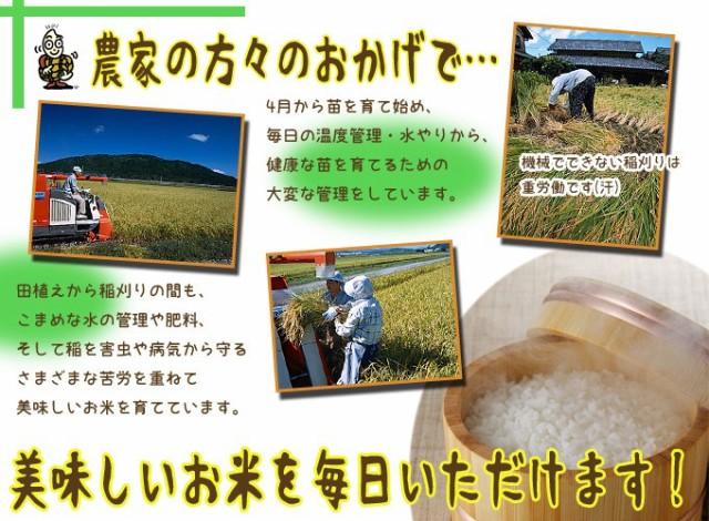 新潟県産コシヒカリ10kg(5kg×2袋)  29年産 送料無料(一部地域のぞく) こしひかり こめ 白米 にいがた