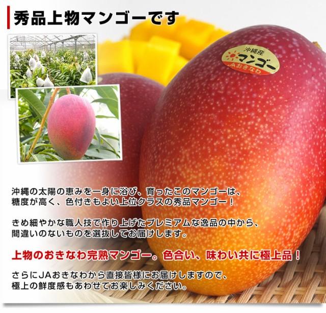 送料無料 沖縄県より産地直送 JAおきなわ 完熟マンゴー 秀品 2Lサイズ×2玉 合計700g(約350g×2玉) クール便 産直だより