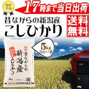 昔ながらの新潟産こしひかり 5kg 29年産 特別栽培米 送料無料(一部地域のぞく) 高田屋お買い得企画