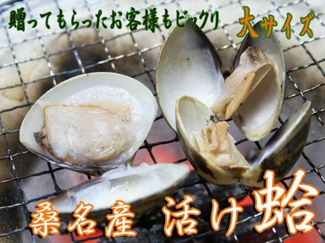 桑名産活け蛤