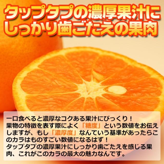 送料無料 カラ カラマンダリン 約2.5kg 柑橘 春みかん 旬 希少 フルーツ 果物 (gn)