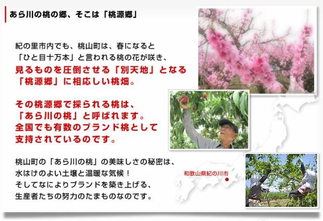 送料無料 和歌山県より産地直送 JA紀の里 あら川の桃 赤秀品 約1.8キロ(6玉から8玉)桃 もも 産直だより