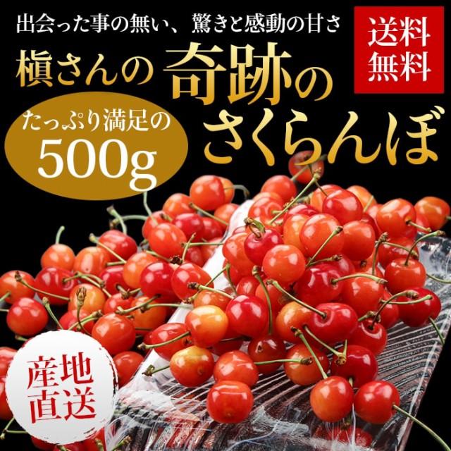 送料無料 高糖度 さくらんぼ 産地直送 山形県東根 槇さんのさくらんぼ約500g 糖度20度以上も! フルーツ 旬 果物