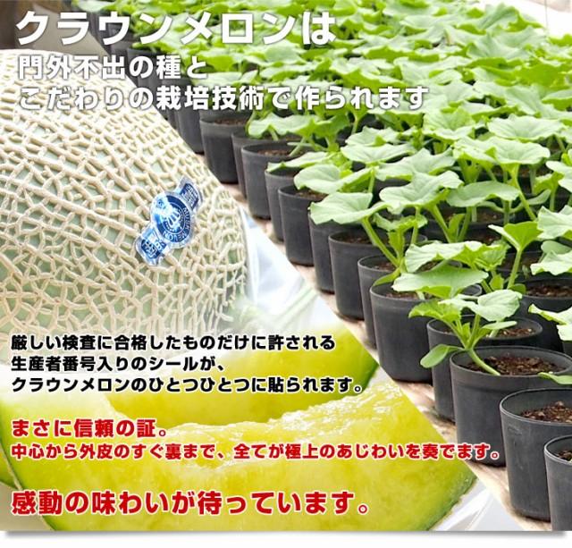 送料無料 静岡県より産地直送 静岡県温室農業協同組合クラウンメロン支所 クラウンメロン 山 8から9キロ(5玉)産直だより