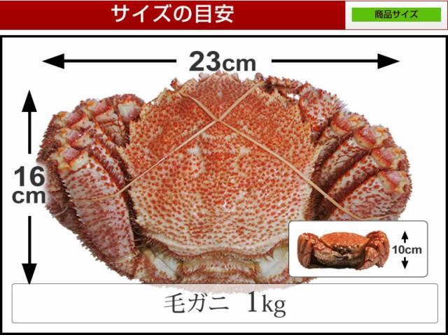毛蟹特大 超希少サイズ1kg