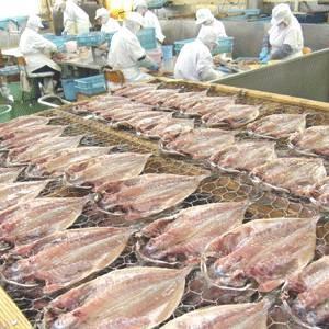 沼津「奧和」のひもの詰合せ7種(18枚)あじ、さんま、かます、金目鯛、えぼ鯛、ほっけ、さば 〔送料無料〕