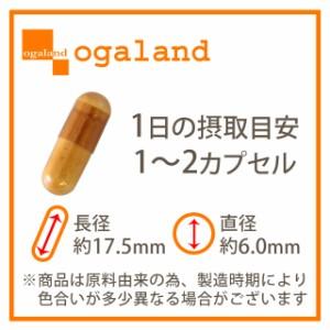 お徳用納豆キナーゼ(2個セット・約6ヶ月分)3150円以上送料無料 ナットウ サプリメント 激安 健康ケア 納豆嫌い トイレ習慣 食生活