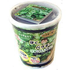 FOREST カップサラダ ぼくパクチー(コリアンダー)(1セット)(発送可能時期:3-7日(通常))[種子・球根]