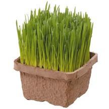 エイムクリエイツ 犬と猫が好きな草 栽培セット