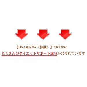 【送料無料】 お得な2個セット DNA+RNA -premium- 60粒 メール便 核酸たっぷり