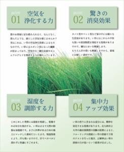 い草ラグ DXモーニング(I) 夏用 純国産 裏面不織布 約191×250cm