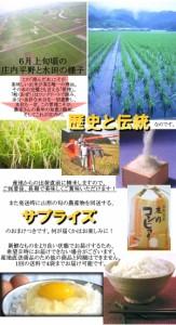平成29年度産 山形庄内の極上米 こしひかり 100% 10kg 産地直送 おまけ付