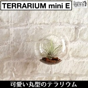 【terrarium miniE(丸型)】テラリウム ミニ 丸型 ハンキング ヴィンテージ エアープランツ インテリア 壁掛け 吊り下げ ガラス 北欧 雑貨