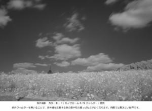 Kenko レンズフィルター PRO1D R-72 58mm モノクロ撮影用 325803
