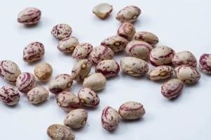 うずら豆 5kg  常温便  豆  Pint Bean  ピント豆  ラジマ チットカブラ  Rajma Chitkabra  インゲン豆