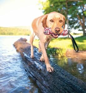 [特殊な製法で編んであるので壊れにくい] EZY DOG イージードッグ ビーバーテイル Lサイズ 【犬 おもちゃ 引っ張り 丈夫 ロー
