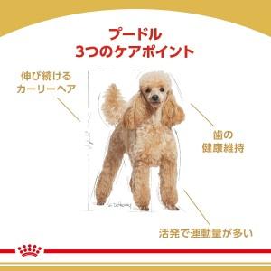 ロイヤルカナン BHN プードル 成犬用 3kg 正規品 3182550765206 【bhn_201603_03】 ジップ付