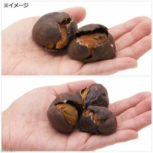 長野県小布施産 極上大粒焼き栗 5個 小動物のおやつ 小鳥 ハムスター 国産 無添加 無着色