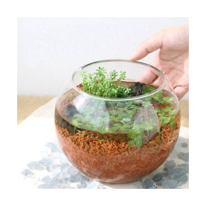 (水草)私の小さなアクアリウム 〜窓辺の2種クローバー(フローラボールL)〜 本州・四国限定