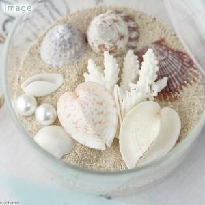 (海水魚 貝殻)シェルコレクション トゥルーハートコックル Mサイズ(1個)(形状おまかせ)