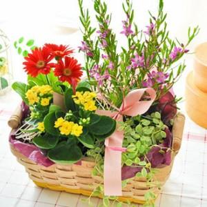 季節のおまかせ花鉢とグリーンの寄せ入れSサイズ【フラワーバスケット】