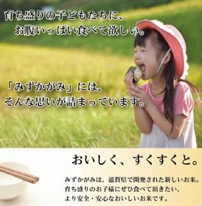 【送料無料】28年産 無洗米特別栽培米滋賀県産みずかがみ10kg(5kg×2袋)【お米/ハーベストシーズン】