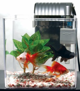 テトラ 金魚飼育セット 【PL−17GF】