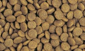 ニュートロ ナチュラルチョイス ドッグフード ラム&玄米 子犬用(妊娠中・授乳中の母犬にも) 全犬種用 6kg