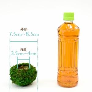 【5個セット】【資材苔玉A3サイズ】資材苔玉7.5〜8.5cmの苔玉 お徳用5個セット