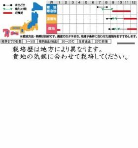 サカタのタネ タケノコ白菜 10ml