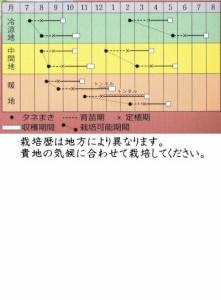 タキイ種苗 ロメインレタス ロマリア ペレット種子約100粒 【郵送対応】