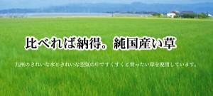 純国産 い草花ござカーペット 『アシック』 グリーン 本間3畳(191×286cm)