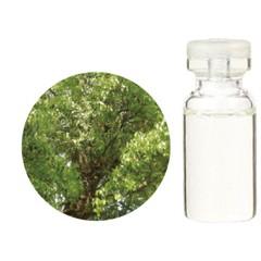送料無料 生活の木 エッセンシャルオイル(精油) クスノキ 10ml TREE OF LIFE アロマ ESSENNTIAL OIL  ポイント10倍