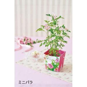 栽培セットフローラルコンテナ花/GD-434
