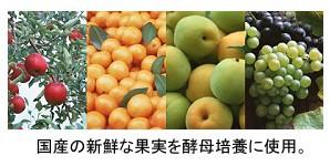果実酵母マーベル  565ml 【天然酵母飲料/ジャフマック】