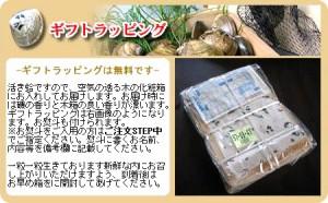 【厳選】高級ハマグリ★じゅるるるっ〜塩風味が!本場活ハマグリ(Lサイズ 約1kg入)