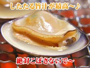 【厳選】高級ハマグリ★じゅるるるっ〜塩風味が!本場活ハマグリ(Mサイズ 約1kg入)