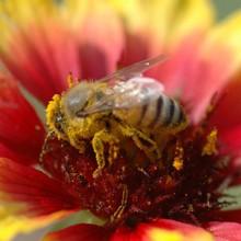 バイタルビー◎蜂のパワーを凝縮!