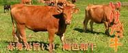 褐毛和牛☆いけだ牛サーロインステーキ