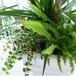 【送料無料】おまかせ観葉植物寄せ植え(M)