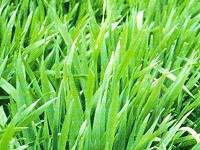 Vグリーン 大麦若葉エキス 3gx60本 x 3箱(徳用) 【送料無料/簡易シェーカー付】