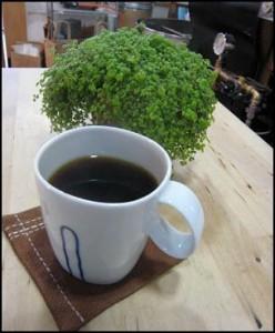 【自家焙煎珈琲豆】ブラジル樹上完熟豆500g
