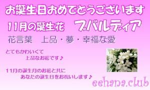 11月誕生花★おまかせフラワー3,500円【送料無料】ネット特価!